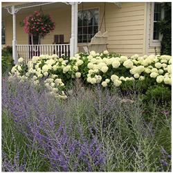 landscaping Home Perennial Garden