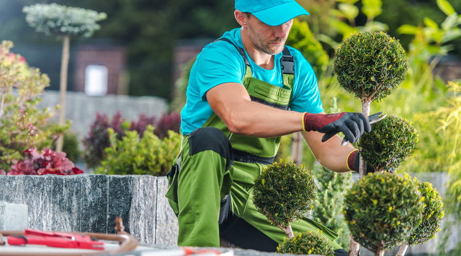 Landscape Contractor For a Beautiful Yard