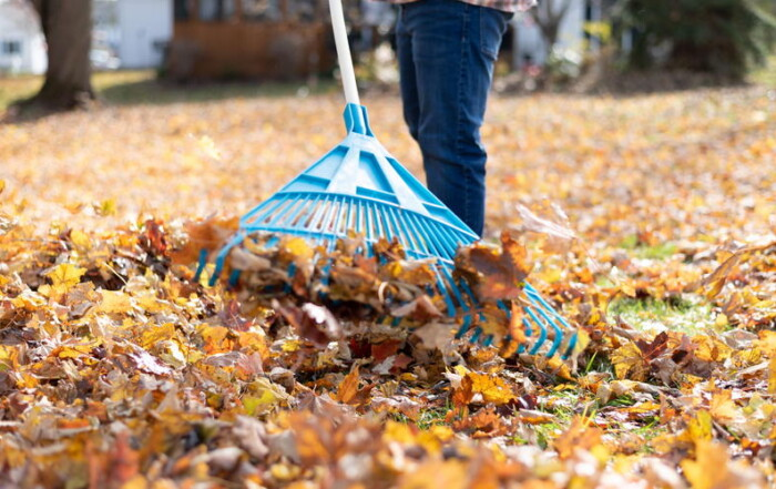 Hire a Landscaper for Your Fall Clean Up